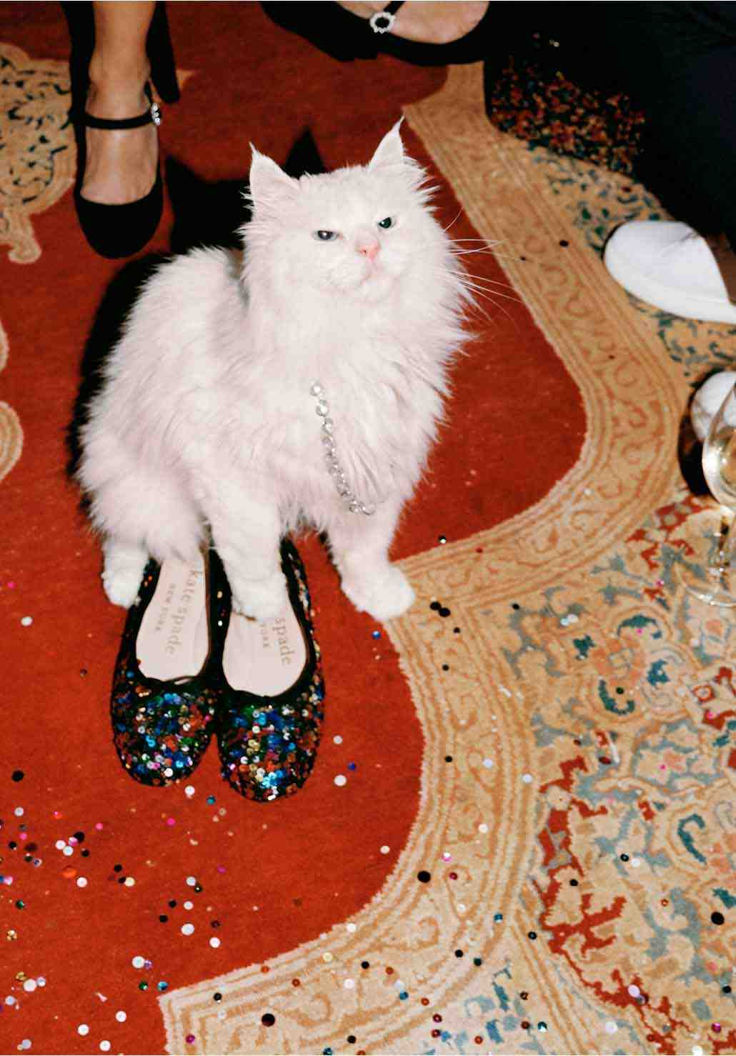 cat with sequins shoes